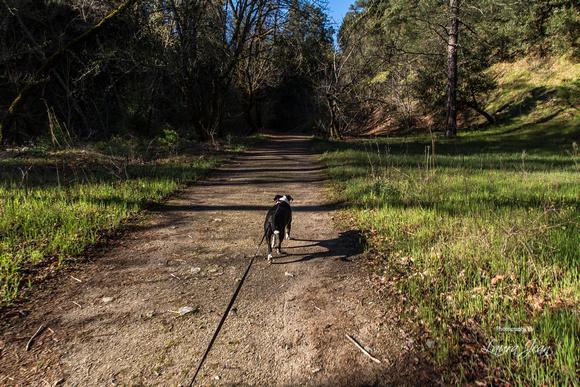 Dog Friendly Trail Hike