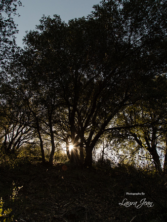 Clear Creek Trail Sunburst