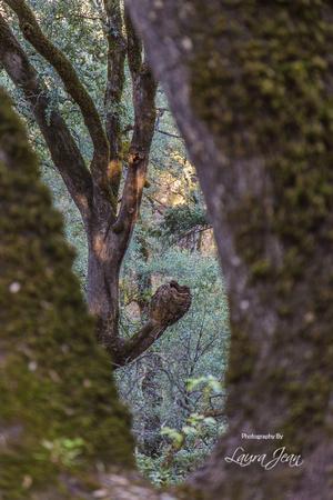 Odd Tree Growth