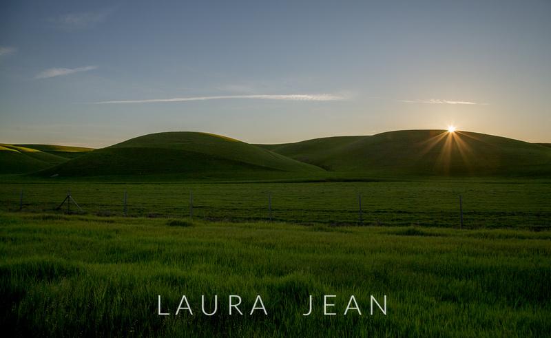Laura Jean Landscapes