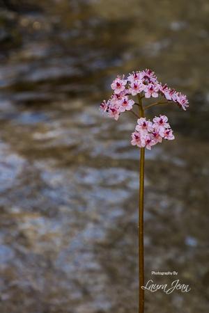Clear Creek Trail Pink Flower